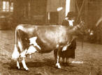 Raleigh's Oxford Thistle Grand Champion 1925 at National Dairy Show