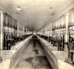 Another Interior View - Dairy Group